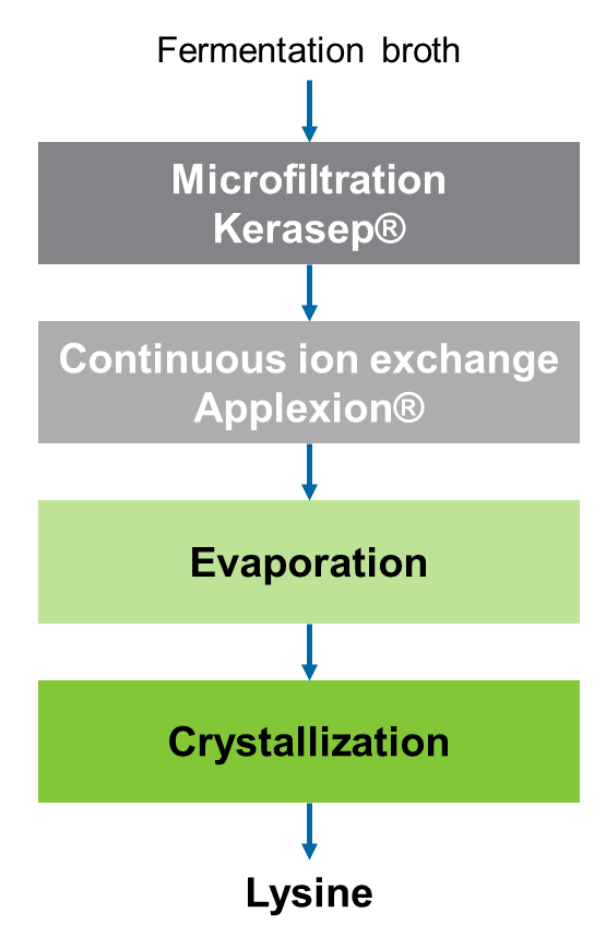 Novasep Lysine Manufacturing Process